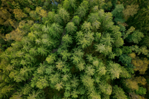 trees forest drone snabshot arboair